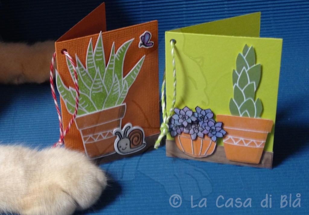 succulents6