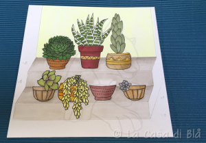succulents_cat11