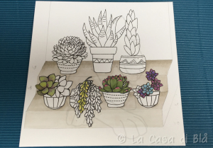 succulents_cat13