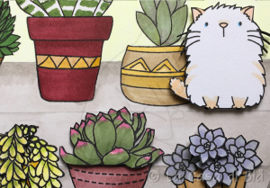 succulents_cat3