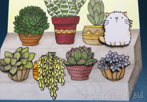 succulents_cat4