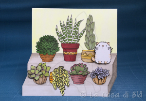 succulents_cat5