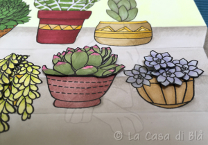 succulents_cat9